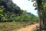 Large 5 Rai Land Plot Midway Between Ao Nang and Krabi Town